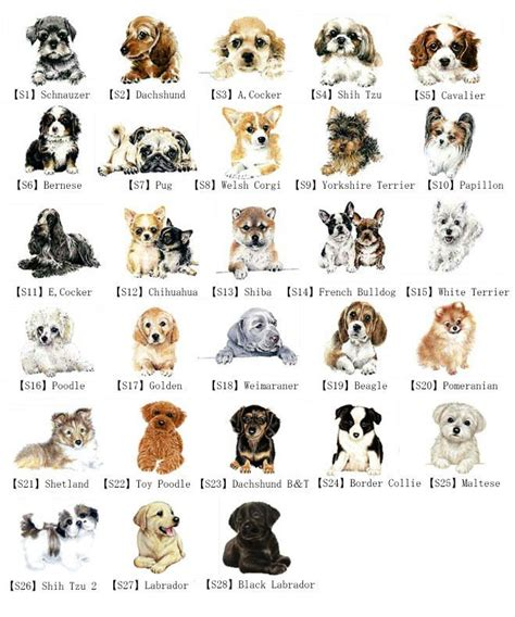 puppies and their breeds alibaba manufacturer directory suppliers manufacturers exporters types of dogs and