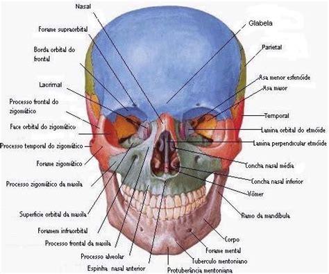 testa anatomia sobota anatomia cr 226 nio raios x br