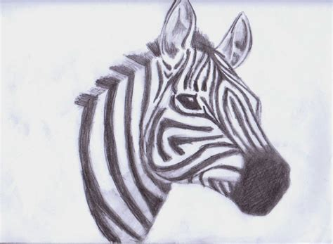 Drawing Images by Zebra Drawing Animals Fan 33043970 Fanpop