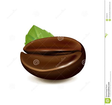 White Coffee 1 Renteng single coffee bean with leaf isolated on white stock