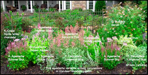 low maintenance garden plants