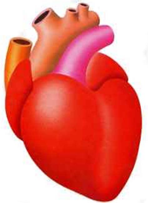 imagenes de corazones del cuerpo humano el corazon dibujo