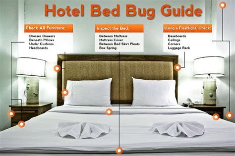 bed bugs in hotel room how to check for bed bugs in a hotel room consumer bed bugs