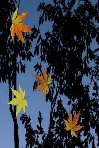 Leaf Live Wallpaper by Fall Leaves Live Wallpaper Gallery