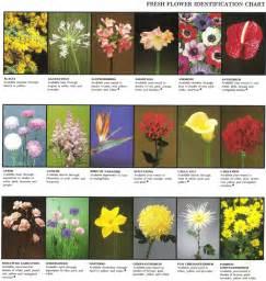 Tropical Flower Arrangements Fresh Flower Identification Chart 171 Rosie S Flower Shop