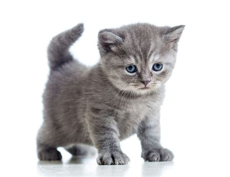 cat pictures wp images kitten post 9