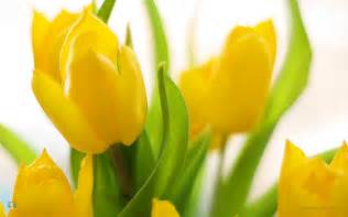 Spring Flowers Pictures Spring Flowers Blooming Images Amp Pictures Becuo