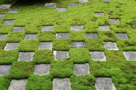 glorious ground cover ideas for your garden modern
