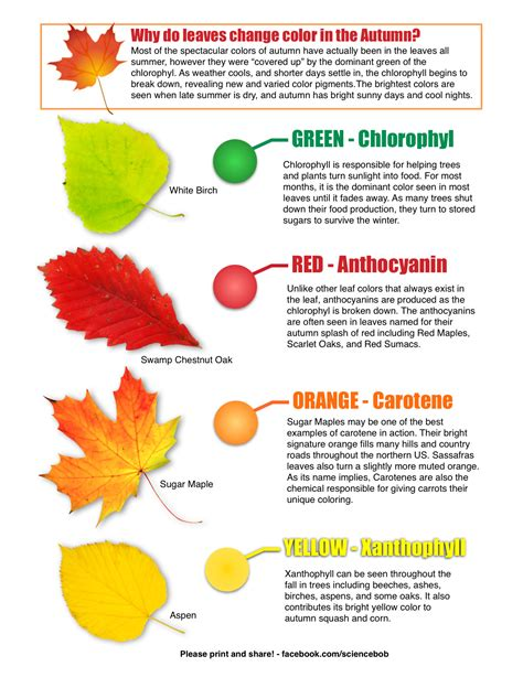 food chemical pigments names why do leaves change color in the autumn from science bob