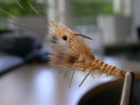 jam fly pattern 64 best images about flies shrimp crayfish crabs on