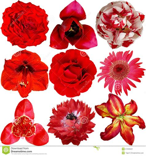 different reds set of different red flowers stock photo image 57349421