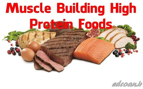 24 h protein performance edge chiropractic pc per meal dose and