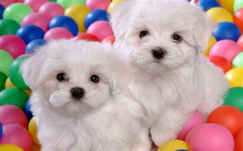cutest puppy pictures puppies puppies wallpaper 22040904 fanpop