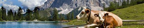 urlaub in den alpen österreich 214 sterreich urlaub in den alpen buchen der