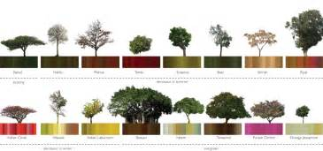 Type Of Trees by Pics Photos Types Of Trees
