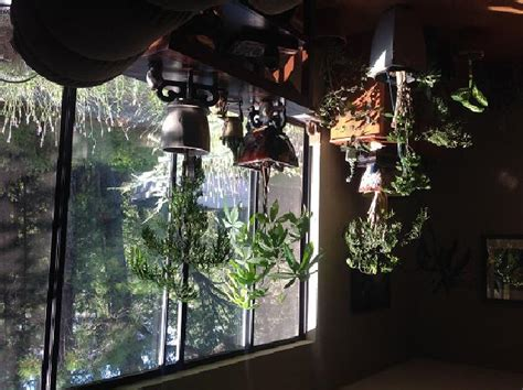 north window plants plants and lighting sierra news online