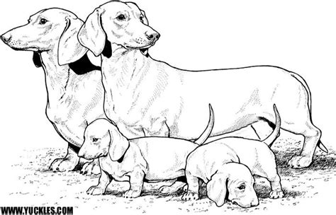 dachshund coloring pages coloring home