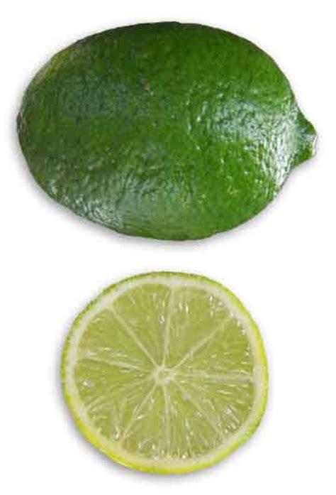 dayap citrus aurantifolia lime philippine medicinal