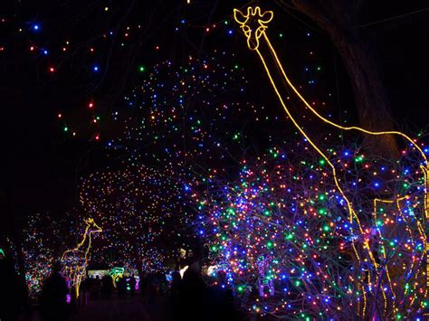 Denver Zoo Lights Preview Weekend And More 5 Things To Denver Zoo Zoo Lights