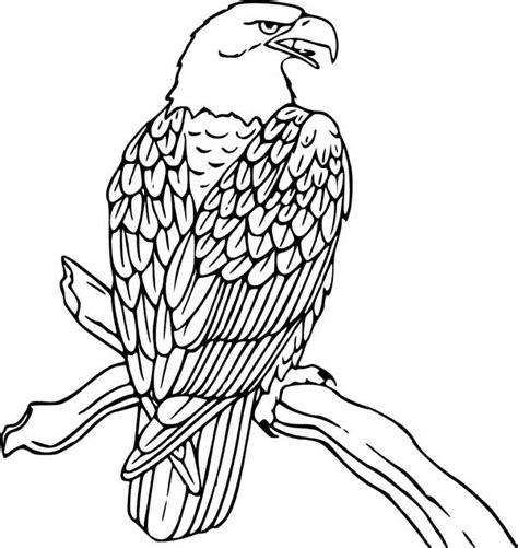elegant and charming collection of eagle coloring pages