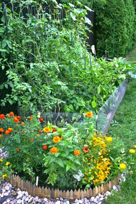 edible flower garden edible landscaping seedling