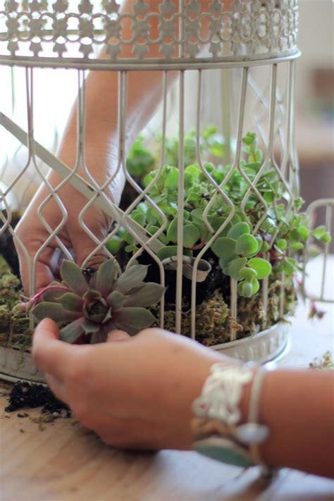 craftberry bush   plant succulents   birdcage