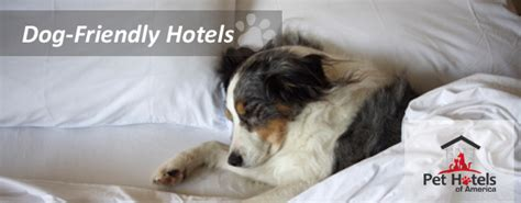 dog friendly bed and breakfast dog friendly bed and breakfast diy project download