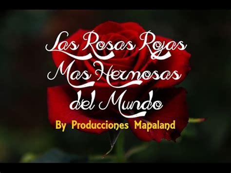 las mas hermosas fotos de rosas con poemas de amor las rosas rojas mas hermosas del mundo youtube