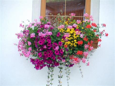 alto come un vaso di gerani a matera il concorso balconi fioriti trmtv