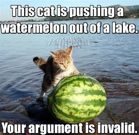 Cat Internet Meme - the past two months as told through internet memes and