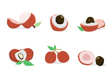 lychee fruit drawing fresh lychee vector download free vector art stock