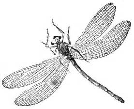 dragonfly images to color free printable dragonfly coloring pages for