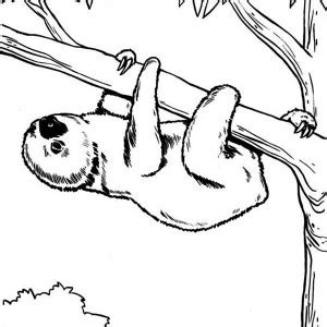 cute endangered animals coloring pages cute best free