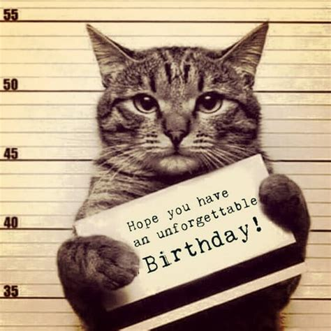 Cat Meme Birthday Cards 45 cat birthday memes wishesgreeting