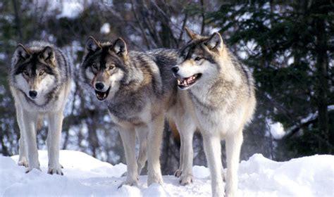 Seven White Wolves boise state radio