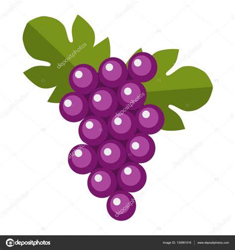 imagenes de uvas vector manojo de uvas isabella h 250 medos azul vector vector de