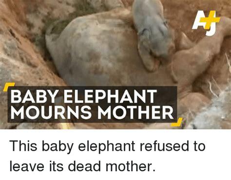 Baby Elephant Meme - 25 best memes about baby elephant baby elephant memes