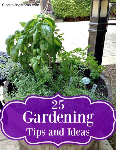 gardening tips and ideas 25 gardening tips and ideas