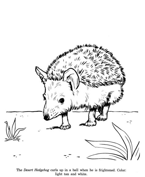 coloring page of a hedgehog hedgehog coloring pages to download and print for free