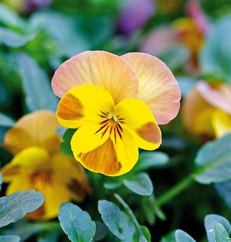 fiori gennaio in edicola dal 23 dicembre casa in fiore di gennaio cose