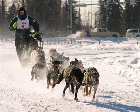 alaskan sled race amazing alaska on alaska alaska travel and