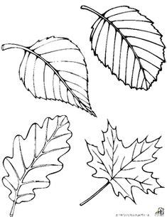 leaf pattern with lines for writing oil and blue fall leaf line drawing template for fall