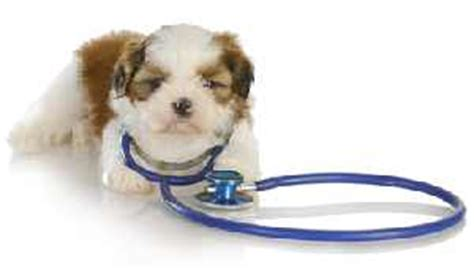 shih tzu breathing problems symptoms is puppy vomiting should you worry