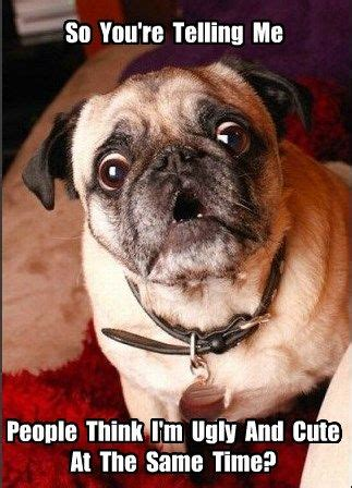 why are pugs called pugs 25 best ideas about pugs on pugs pugs and pug bread