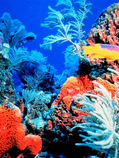 colorful coral reef hd wallpapers