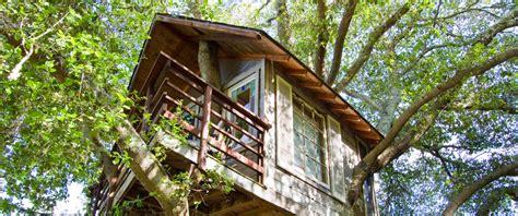 albero in casa una casa sugli alberi proprio come ecobnb