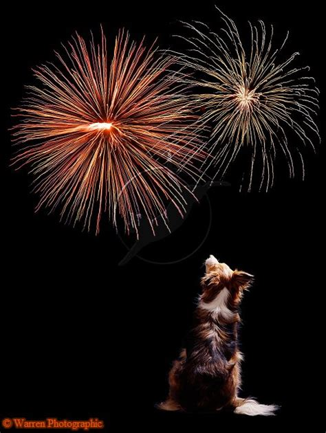 fireworks dogs hart humane animal rescue team fido and fireworks