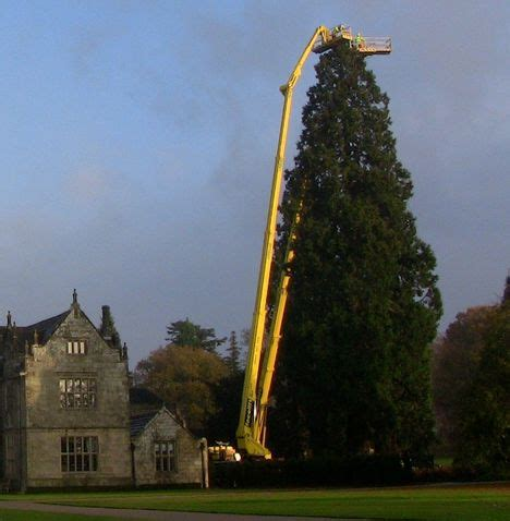 putting the lights on a 35m christmas tree all things cranes