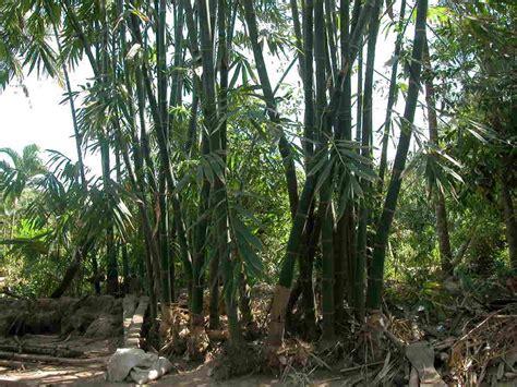 bamboo cay c 226 y tre sinh vật cảnh c 226 y cảnh c 225 cảnh chim cảnh g 224 cảnh ch 243 cảnh th 250 cưng h 242 n