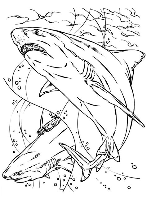 jaws coloring page www imgkid com the image kid has it